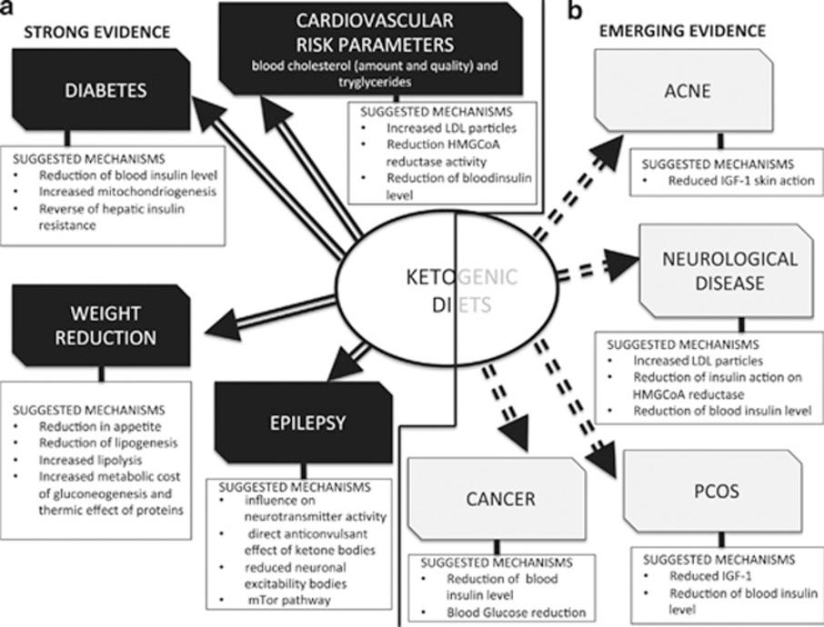 mechanismy pro terapeutické působení ketogenních diet